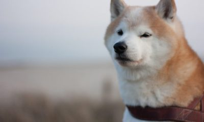 Gone too far? Here's what Elon Musk's new 'strategy' means for Dogecoin